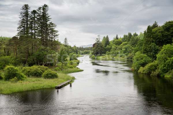 view to river in ireland valley Stock photo © dolgachov