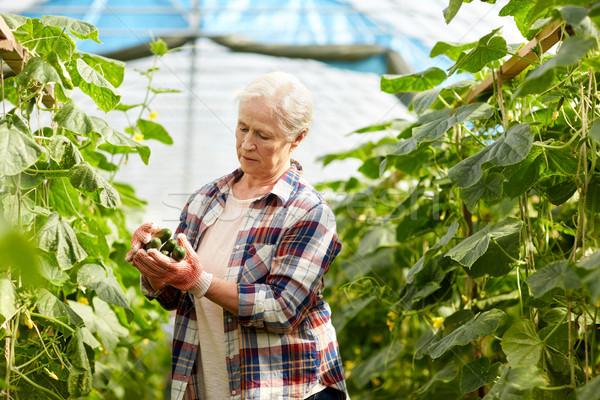 Vieja pepinos hasta granja invernadero Foto stock © dolgachov