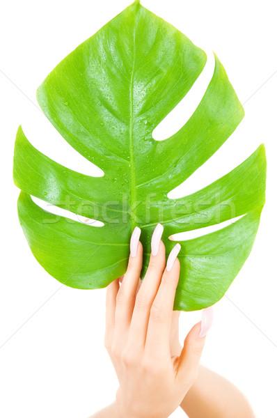 Női kezek zöld levél kép fehér nő Stock fotó © dolgachov
