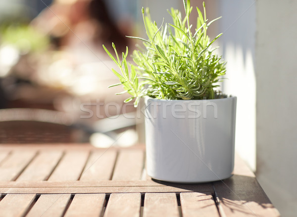 Verde plantă ghiveci de flori stradă cafenea tabel Imagine de stoc © dolgachov