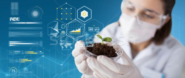 Cientista planta solo virtual gráficos ciência Foto stock © dolgachov