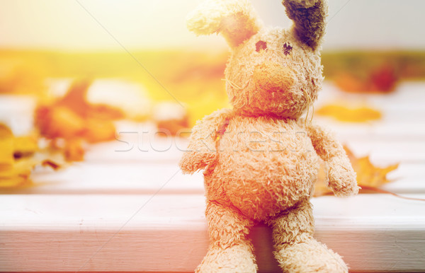 close up of toy rabbit on bench in autumn park Stock photo © dolgachov
