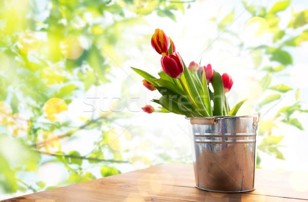 Tulip цветы олово ковша флора Сток-фото © dolgachov