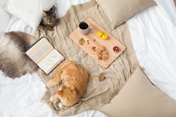 Dois gatos cobertor casa outono animais de estimação Foto stock © dolgachov
