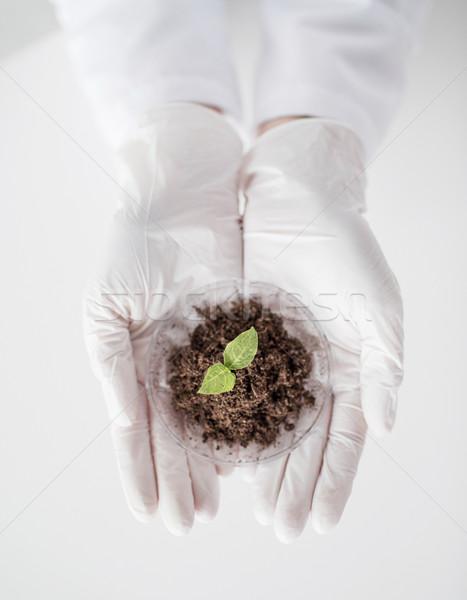 Cientista mãos planta solo ciência Foto stock © dolgachov