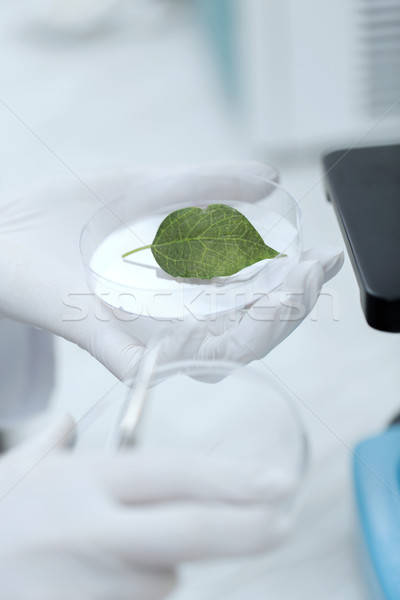 Hand microscoop groen blad wetenschap chemie Stockfoto © dolgachov
