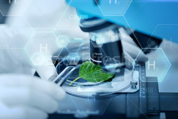Foto stock: Mão · microscópio · folha · verde · ciência · química