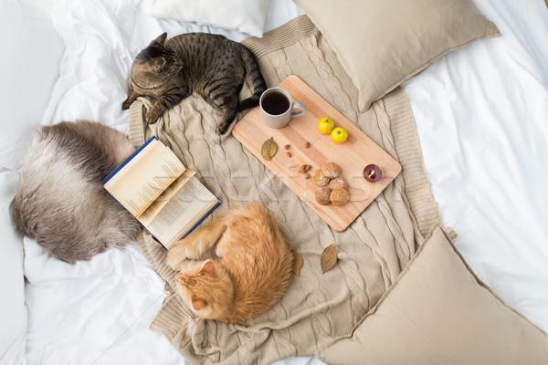Kettő macskák pléd otthon ősz díszállatok Stock fotó © dolgachov