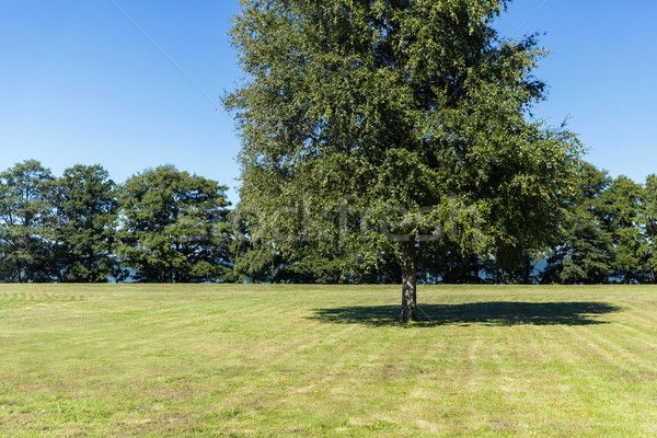 summer field and trees Stock photo © dolgachov
