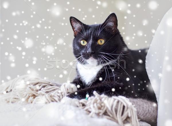 Stock fotó: Feketefehér · macska · kockás · otthon · díszállatok · háziállatok