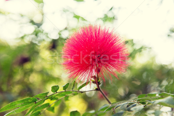 beautiful exotic flower Stock photo © dolgachov