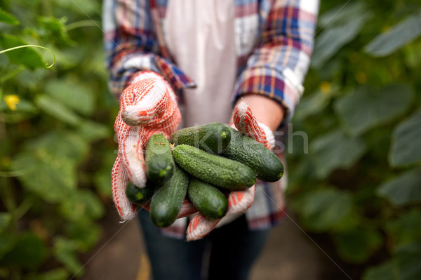 Landbouwer komkommers boerderij broeikas tuinieren Stockfoto © dolgachov