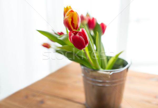 Tulipano fiori flora primavera giardinaggio Foto d'archivio © dolgachov