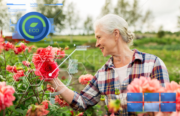 senior woman with flowers at summer garden Stock photo © dolgachov