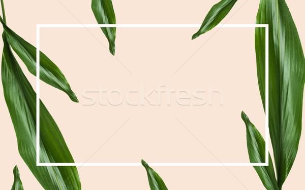 Foglie verdi rettangolare frame beige natura Foto d'archivio © dolgachov