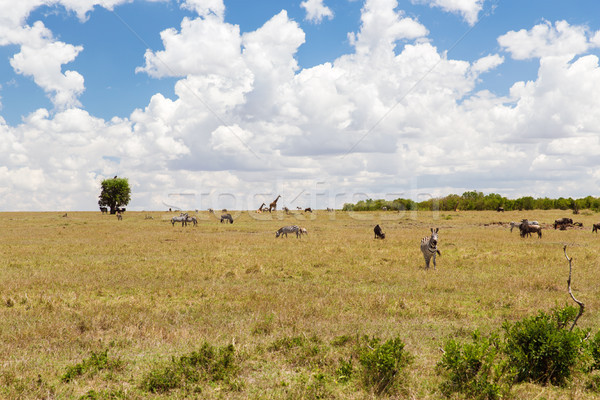 group of herbivore animals in savannah at africa Stock photo © dolgachov
