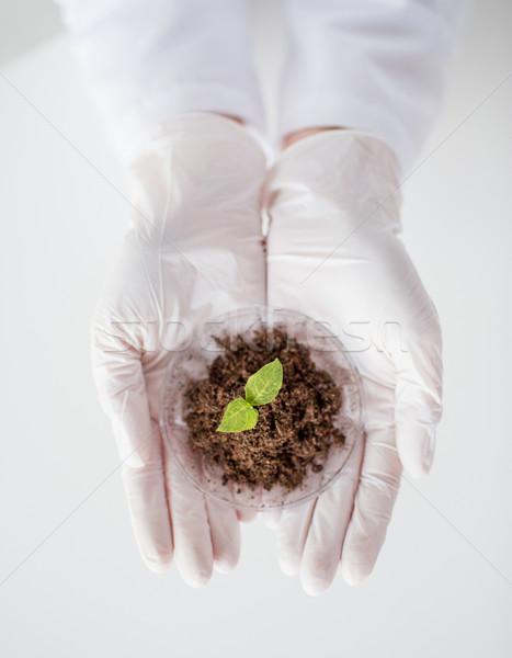 科学 手 工場 土壌 科学 ストックフォト © dolgachov