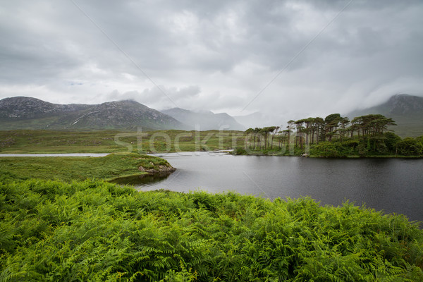 view to island in lake or river at ireland Stock photo © dolgachov