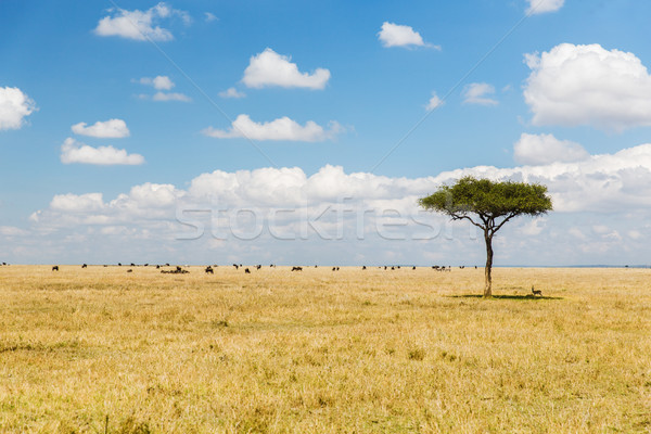 tree and herd of animals in savannah at africa Stock photo © dolgachov