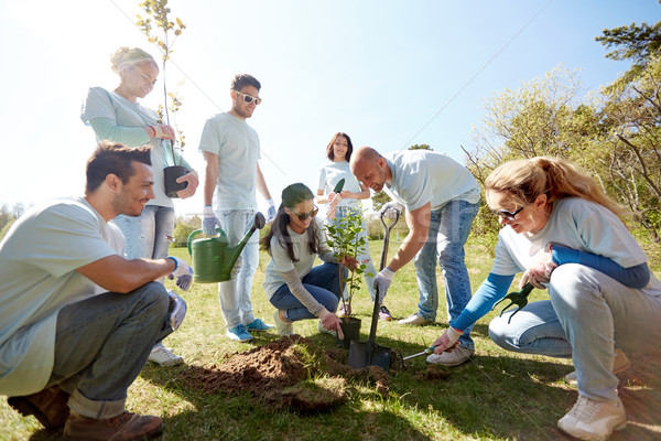 group of volunteers planting tree in park Stock photo © dolgachov
