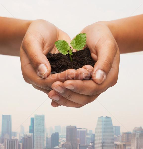 Mulher mãos planta solo ambiente Foto stock © dolgachov