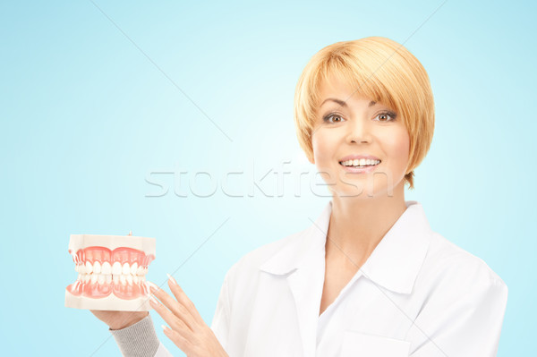 happy female doctor with jaws model Stock photo © dolgachov
