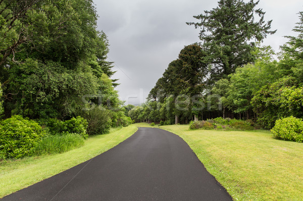 Aszfalt út Írország utazás vidék természet Stock fotó © dolgachov