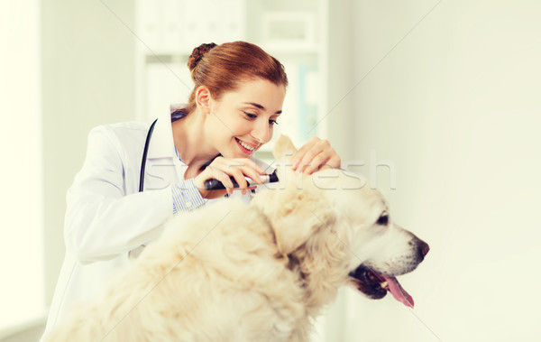 happy doctor with otoscope and dog at vet clinic Stock photo © dolgachov
