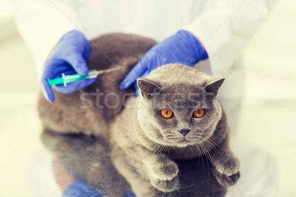 ветеринар вакцина кошки клинике Сток-фото © dolgachov