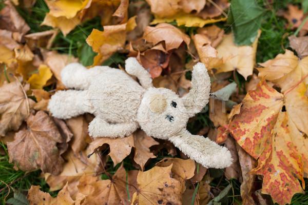 toy rabbit in fallen autumn leaves Stock photo © dolgachov