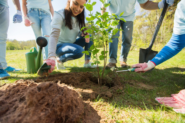 group of volunteers hands planting tree in park Stock photo © dolgachov