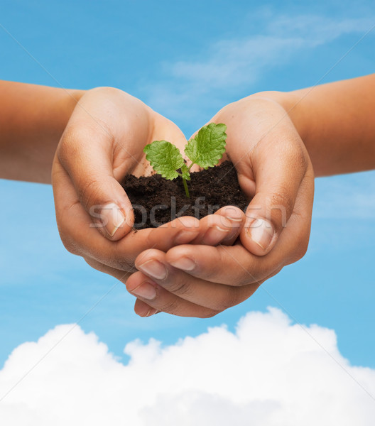 woman hands holding plant in soil Stock photo © dolgachov