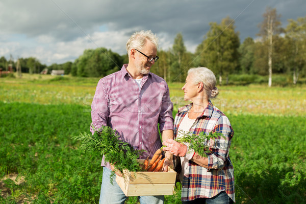 Finestra carote farm giardinaggio Foto d'archivio © dolgachov