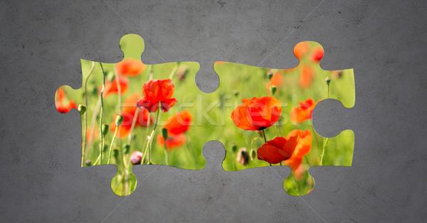 summer blooming poppy field over gray concrete Stock photo © dolgachov