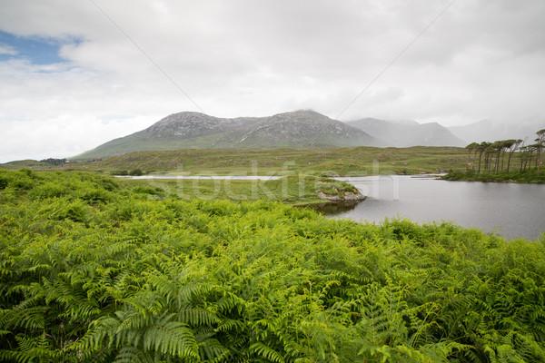 view to island in lake or river at ireland Stock photo © dolgachov