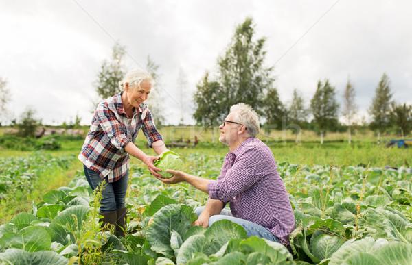 Lahana çiftlik bahçıvanlık Stok fotoğraf © dolgachov