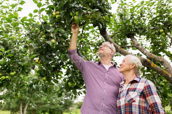 senior couple with apple tree at summer garden Stock photo © dolgachov