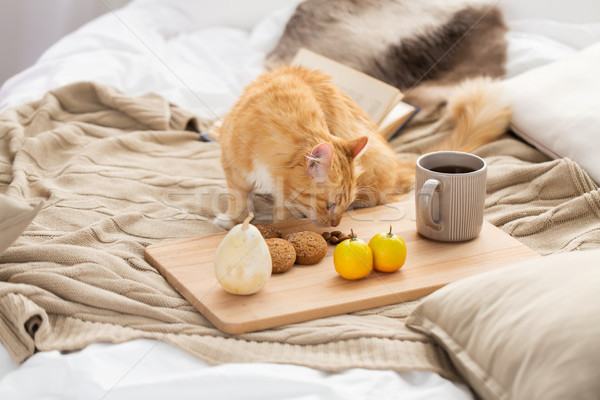 red tabby cat sniffing food on bed at home Stock photo © dolgachov