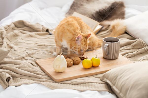 Piros macska étel ágy otthon díszállatok Stock fotó © dolgachov