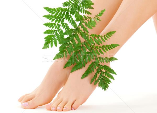女性 フィート 緑色の葉 画像 白 女性 ストックフォト © dolgachov