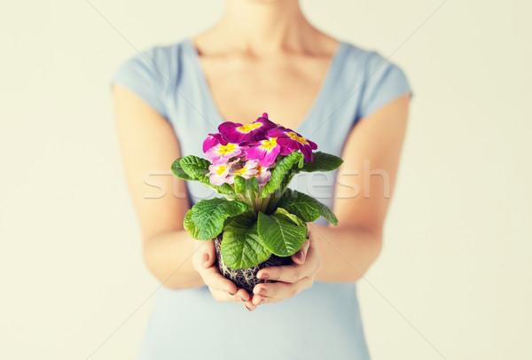 Mãos flor solo primavera Foto stock © dolgachov