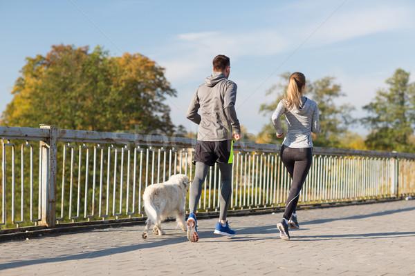 couple with dog running outdoors Stock photo © dolgachov