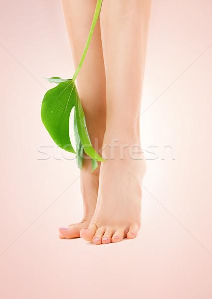 Feminino pernas folha verde quadro bege mulher Foto stock © dolgachov