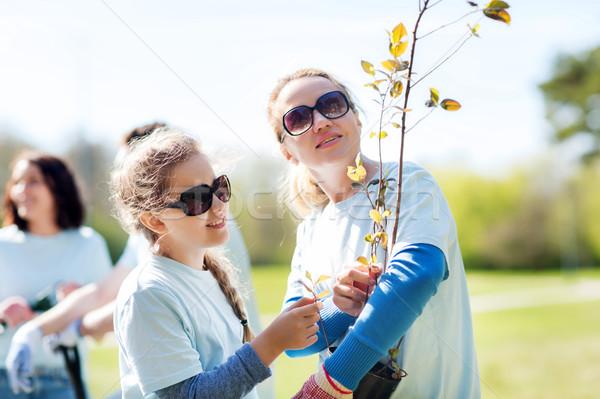 Aile ağaç fide park gönüllü Stok fotoğraf © dolgachov