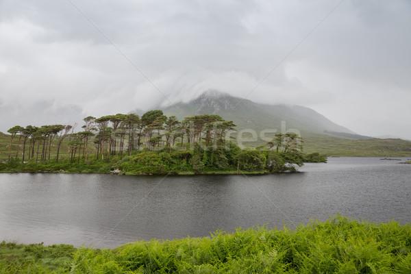 Kilátás sziget tó folyó Írország természet Stock fotó © dolgachov