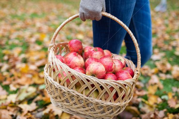 woman with basket of apples at autumn garden Stock photo © dolgachov