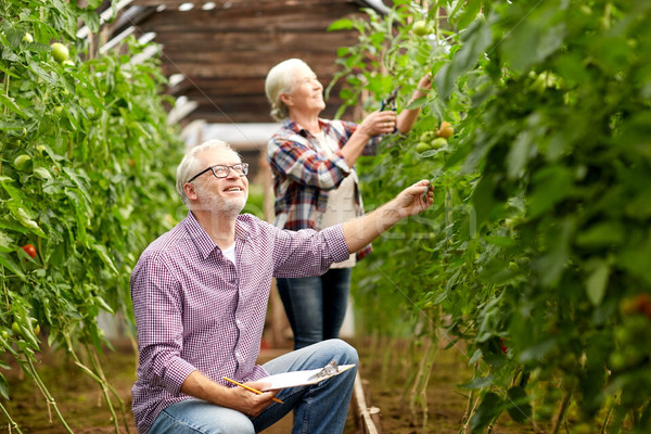 senior couple growing tomatoes at farm greenhouse Stock photo © dolgachov