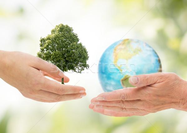 Mains vert chêne terre planète terre Photo stock © dolgachov