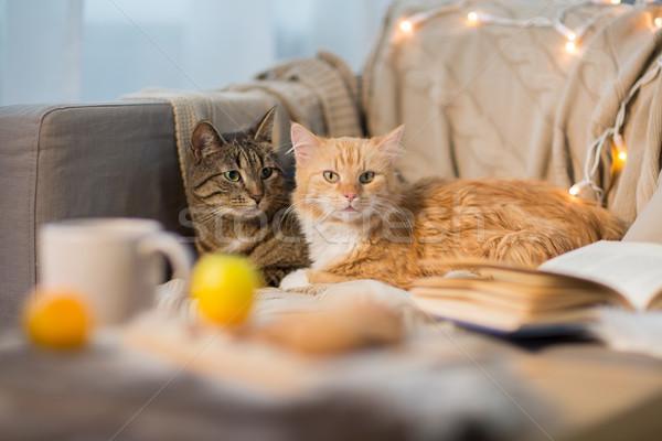 two cats lying on sofa at home Stock photo © dolgachov