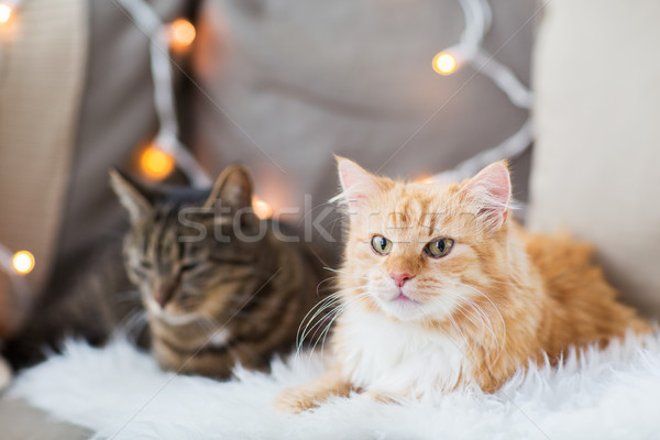 two cats lying on sofa with sheepskin at home Stock photo © dolgachov